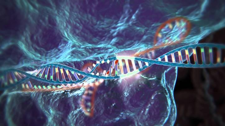 Erfðabreyting á myndformi með CRISPR-Cas9.